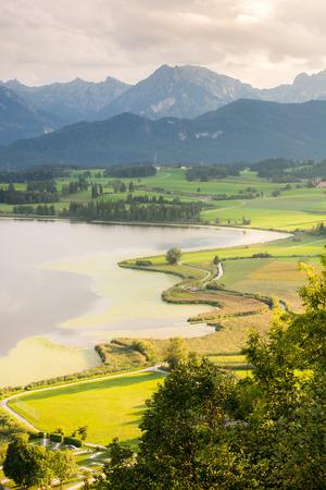 swampland: Swampland at lake Hopfensee (Bavaria, Germany)