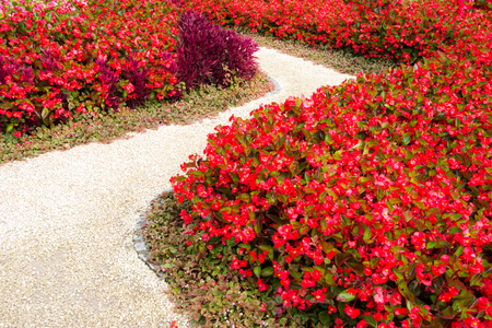 footway: Curved sidewalk through a flowerbed full of red flowers Stock Photo