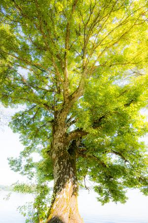 huge tree: Detail of a huge tree