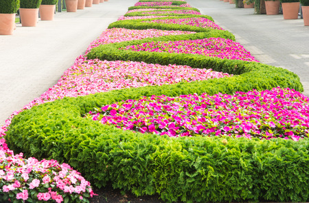 sinuous: Flowerbed with a pattern forming a sinuous line.
