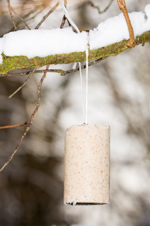 fat bird: Fat block hanging on a tree for bird feeding in winter