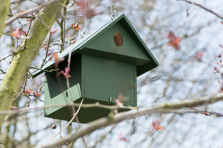 loophole: Green wooden birdhouse hanging in a tree