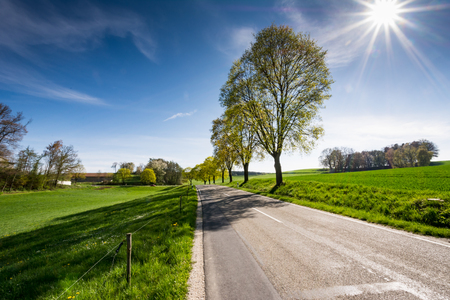 Landscape with trees along a country road