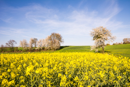 flowering: Landscape with a flowering tree at spring Stock Photo