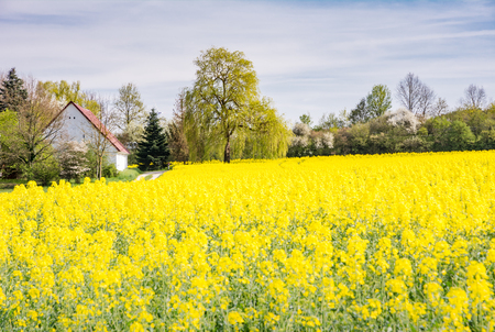 Landscape with a farm behind a yellow rape field Stock Photo