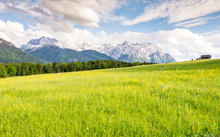Pasture in the Karwendel mountains of the alps in Bavaria (Germany)