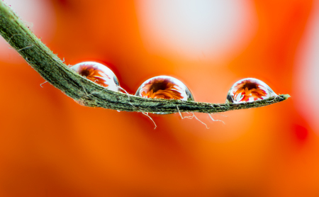 Macro of a flower refraction in three dew drops on a blade of grass