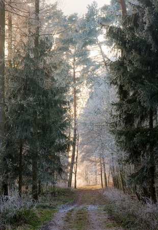frosted: Dirt track through a forest with frosted trees (Bavaria, Germany) Stock Photo