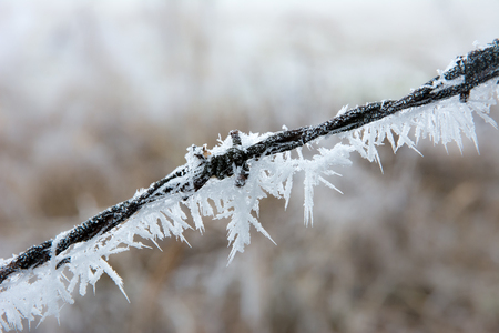 ice crystals: Closeup of frozen barbwire with ice crystals Stock Photo