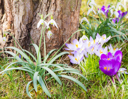 Various spring flowers at a tree trunk in the grass