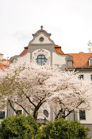 residenz: Flowering tree at a government building Augsburg. The building from the 18th century was in former times a bishop residence Stock Photo