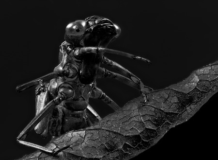 Black and white portrait of the empty skin of a dragonfly larva