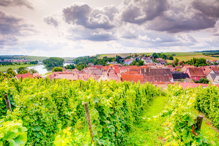 View over a vineyard and the village Wipfeld in Franconia (Germany)