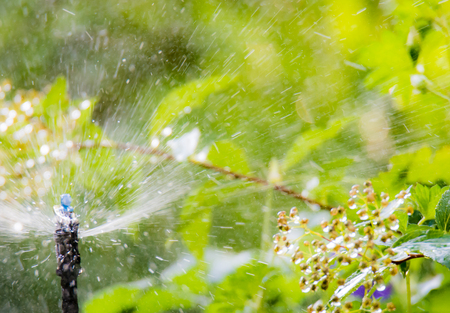 Plant and garden irrigation with an automatic watering system Stock Photo