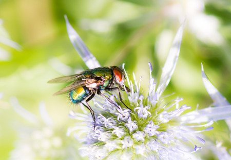 Macro of a fly sitting on a blossom