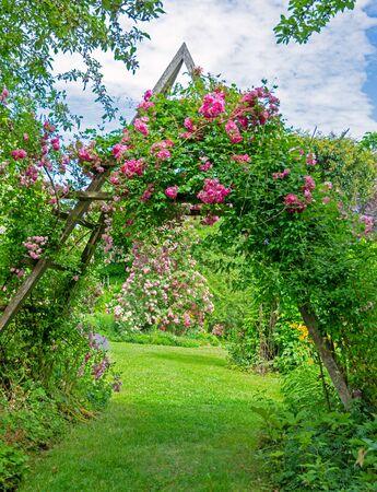 Idyllic rose garden with pink flowering rambler roses
