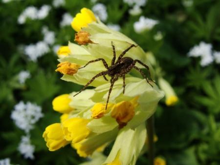 blume: Spinne auf Blume Stock Photo