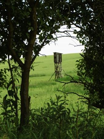 Perch in the field Stock fotó