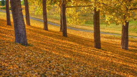 Autumn Park Fall Landscape  photo