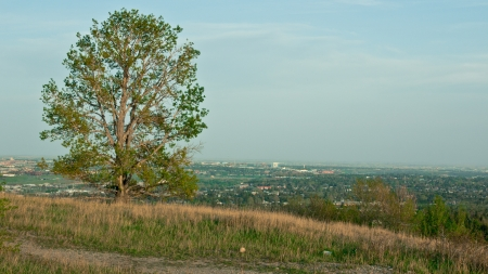 Lonely tree in CAngary Nose Hill park photo
