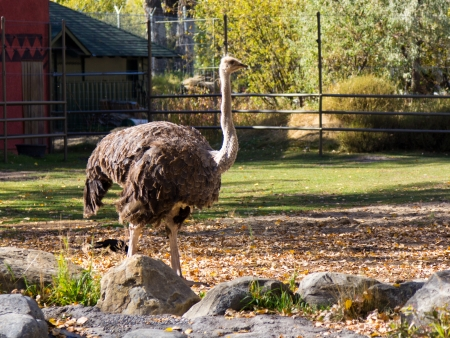 nature reserves of israel: Ostrich