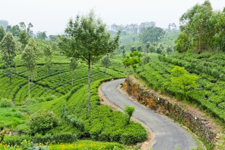 Beautiful Mountain Road through tea estates in Sri Lanka photo