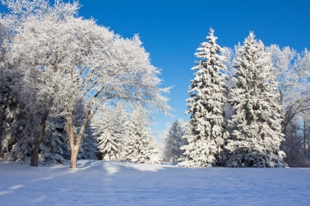 White Snow covered trees against blue sky photo