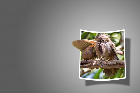 bounds: Out Of Bounds  Bird couple in love Stock Photo