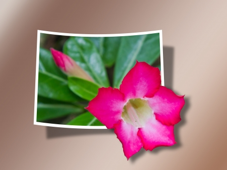 bounds: Out Of Bounds  Pink Flower with Leaves Stock Photo