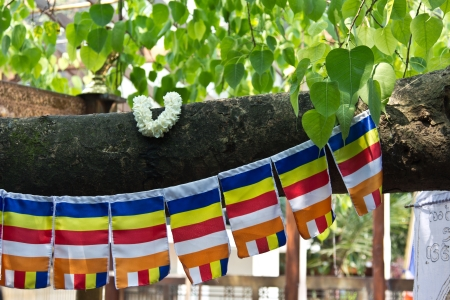 peepal tree: Buddhist flags hanging on a bodhi tree