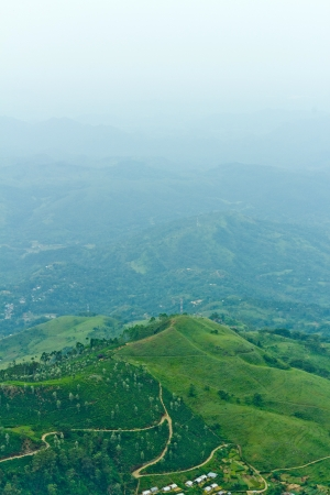 Famous green tea plantation landscape view from Lipton s Seat, Haputale  photo