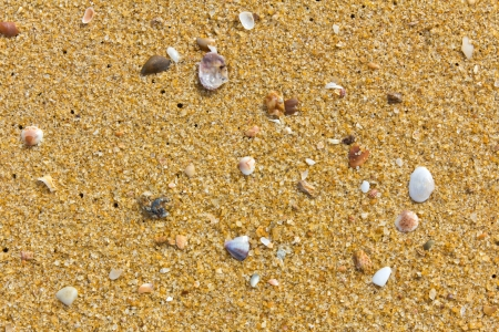 Sea shells on a sandy beach  photo