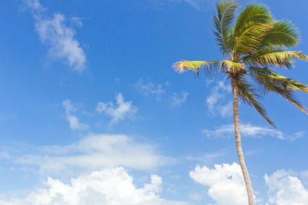 Coconut tree against blue sky photo