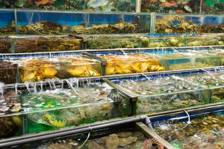 Fresh seafood restaurants in Hong Kong, China photo