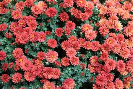 Flower Background photo
