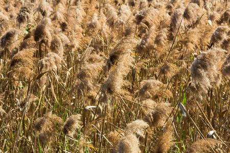 Grass Lands in Hong Kong Wetland Park  photo