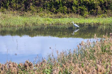 mitigation: Migrating Birds in Hong Kong Wetland Park  Stock Photo