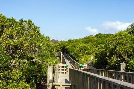 Narrow timber bridge in Hong Kong Wetland Park  photo