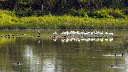 홍콩 습지 공원의 새 이주