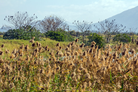 Grass Lands in Hong Kong Wetland Park  photo