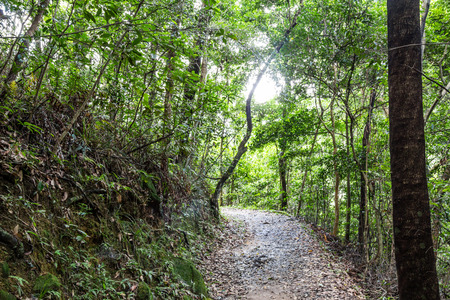 nature trail photo