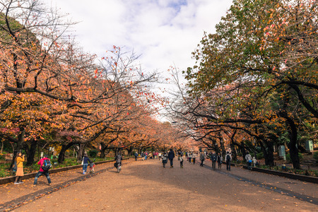 Ueno park in Autumn in Tokyo, Japan. It is a spacious public park in the Ueno district of Taitō, Tokyo, Japan.