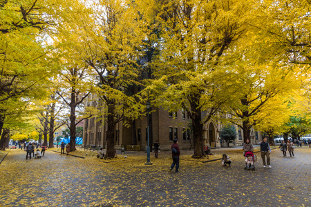 lecture theatre: The Hongo campus of University of Tokyo in Autumn. The main Hongo campus occupies the former estate of the Maeda family, Edo period feudal lords of Kaga Province.