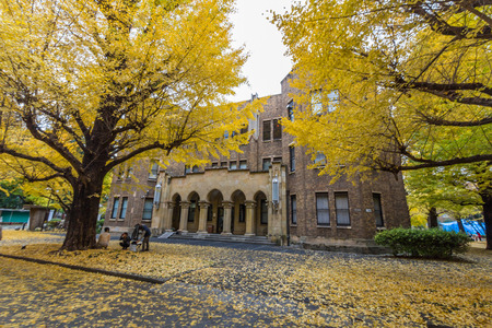 lords: The Hongo campus of University of Tokyo in Autumn. The main Hongo campus occupies the former estate of the Maeda family, Edo period feudal lords of Kaga Province.
