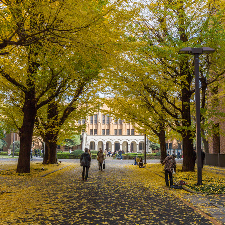 lord's: The Hongo campus of University of Tokyo in Autumn. The main Hongo campus occupies the former estate of the Maeda family, Edo period feudal lords of Kaga Province.