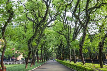 both sides: Shaded street with beautiful trees in both sides