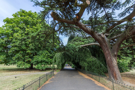 kensington: Kensington Gardens in London, UK