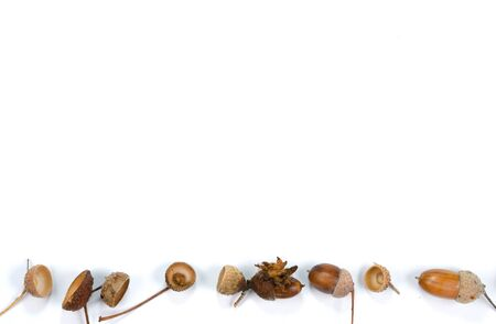 Autumn composition on white background . Row of dried  acorns .