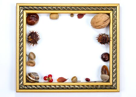 Autumn composition  indoor  on white background  . Empty golden frame  having inside  chestnuts, acorns, rust leaves, nuts , rowan berries , snail shell Top view , copy space , flat lay .