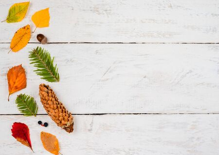 Autumn  composition  background.  Vertical row  of   rusty  leaves ,  pinecone      , fir  branches on white timber      .Top view, copy space,  flat lay .